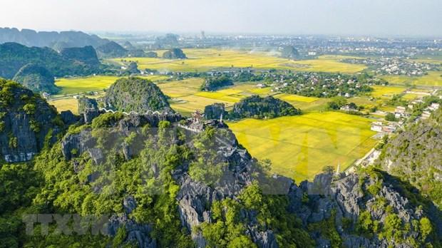 [Foto] Belleza de la temporada de cosecha de arroz en Ninh Binh hinh anh 5
