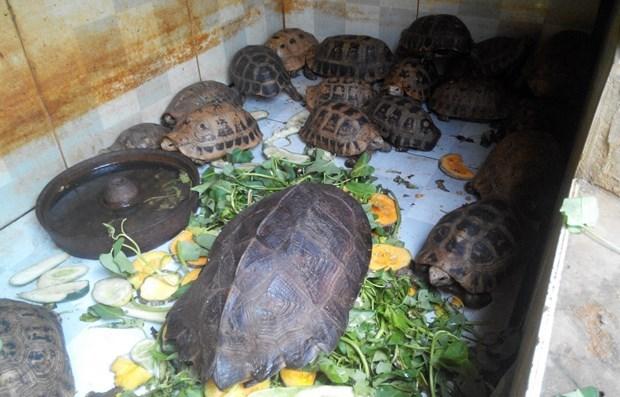 Vietnam implementa 10 acciones urgentes para detener comercio ilegal de especies silvestres hinh anh 1