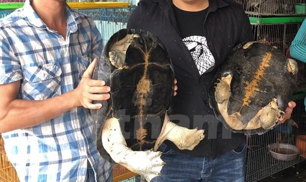 Vietnam implementa 10 acciones urgentes para detener comercio ilegal de especies silvestres hinh anh 2