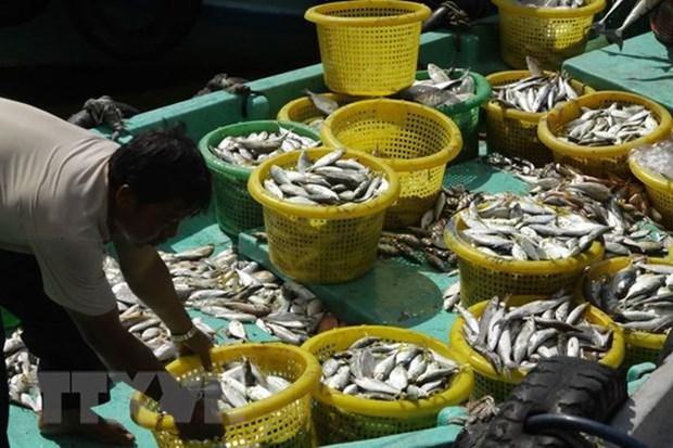Promueven desarrollo de economia maritima en provincia vietnamita hinh anh 2