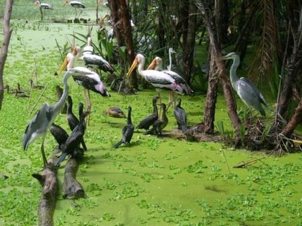 Preservan jardines de aves en provincia vietnamita mediante incentivos en ecoturismo hinh anh 2