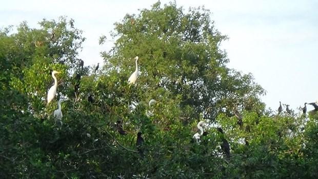 Preservan jardines de aves en provincia vietnamita mediante incentivos en ecoturismo hinh anh 1