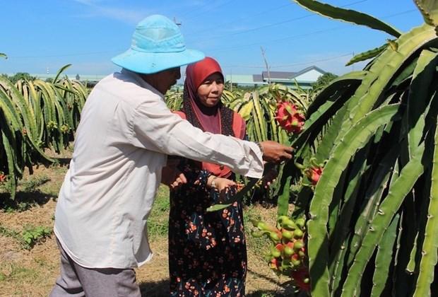 Localidad vietnamita por impulsar desarrollo economico en areas de minorias etnicas hinh anh 1