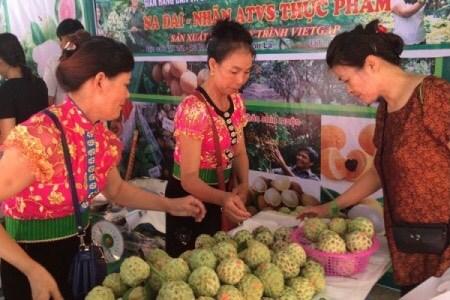 Promueve Vietnam desarrollo comercial en zonas montanosas e insulares hinh anh 1