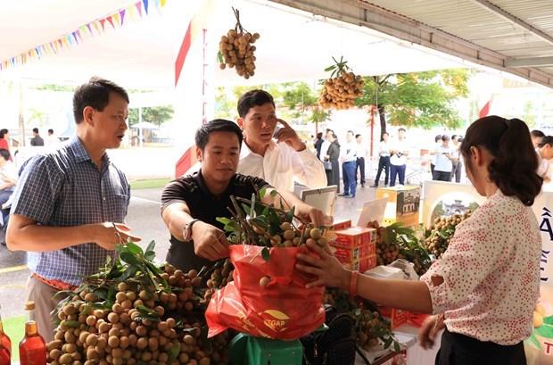 Comercio electronico: canal de promocion del longan vietnamita hinh anh 1