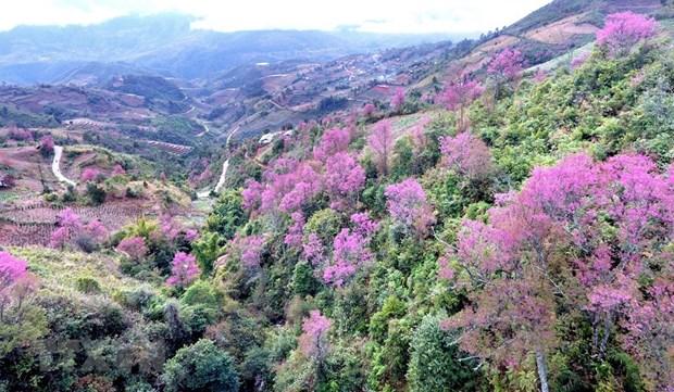 [Foto] Belleza de Mu Cang Chai en la primavera hinh anh 1