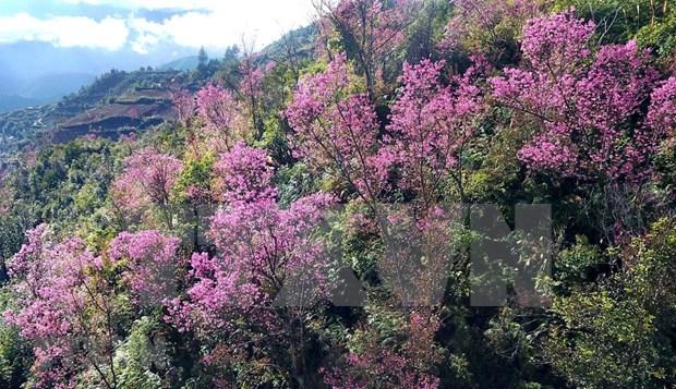 [Foto] Belleza de Mu Cang Chai en la primavera hinh anh 2