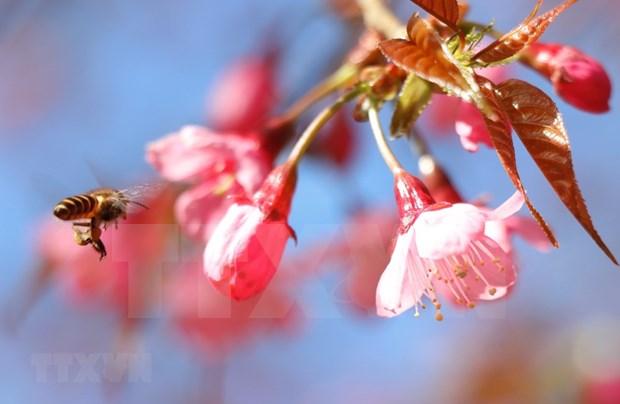 [Foto] Belleza de Mu Cang Chai en la primavera hinh anh 5
