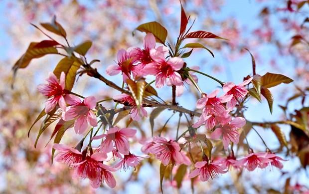 [Foto] Belleza de Mu Cang Chai en la primavera hinh anh 6