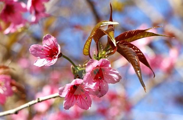 [Foto] Belleza de Mu Cang Chai en la primavera hinh anh 7