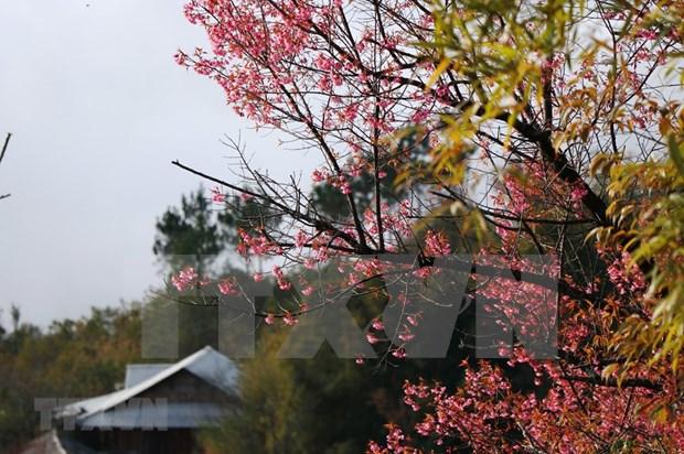 [Foto] Belleza de Mu Cang Chai en la primavera hinh anh 8