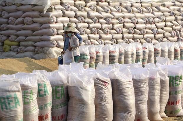 [Foto] Abundante cosecha Invierno-Primavera de 2019-2020 de arroz en Delta del Mekong hinh anh 8