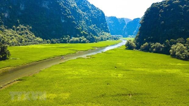 [Foto] Belleza de Tam Coc en la temporada de arroz en crecimiento hinh anh 2
