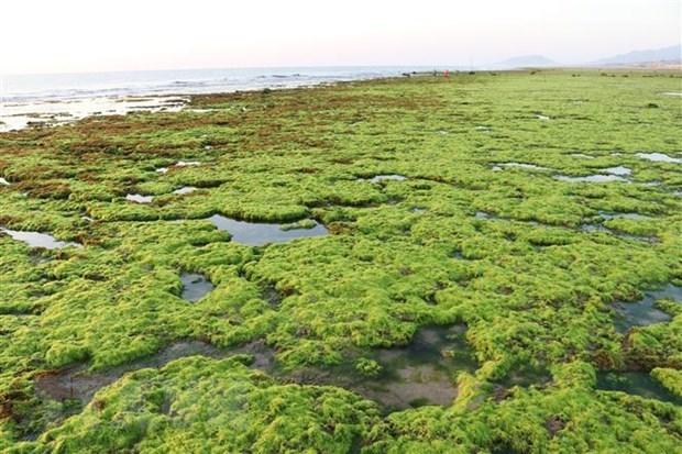 Provincia de Ninh Thuan busca proteger biodiversidad maritima hinh anh 2