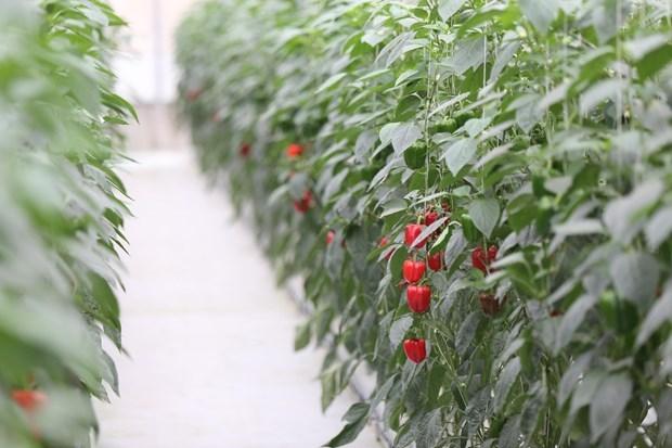 Vietnam aspira a convertirse en pais pionero en crecimiento verde hinh anh 2