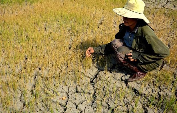 Incorporan perspectiva de genero en politicas de respuesta al cambio climatico en Vietnam hinh anh 1