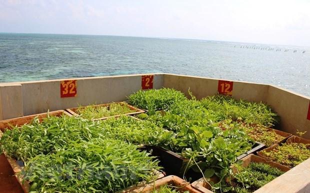 Vitalidad en el archipielago vietnamita de Spratly hinh anh 2