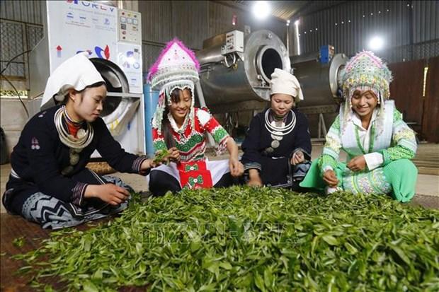 Proyectos agricolas contribuyen al desarrollo de areas montanosas en Vietnam hinh anh 1