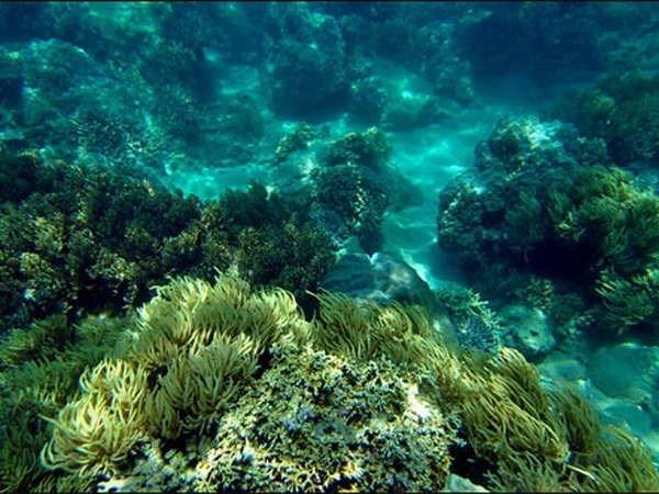 Buscan recuperar coral mediante arrecifes artificiales en costa de Vietnam hinh anh 1