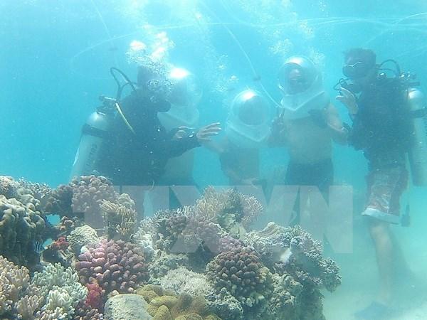 Impulsan proteccion y restauracion de ecosistemas marinos en Vietnam hinh anh 1