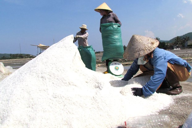 Vietnam se esfuerza por desarrollar industria salinera en Sa Huynh hinh anh 1