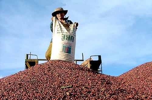 Aumentan exportaciones de productos acuicolas, cafe y te de Vietnam hinh anh 1