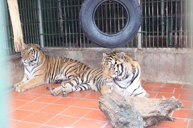 Agencias de viajes luchan contra comercio de animales y plantas silvestres hinh anh 1