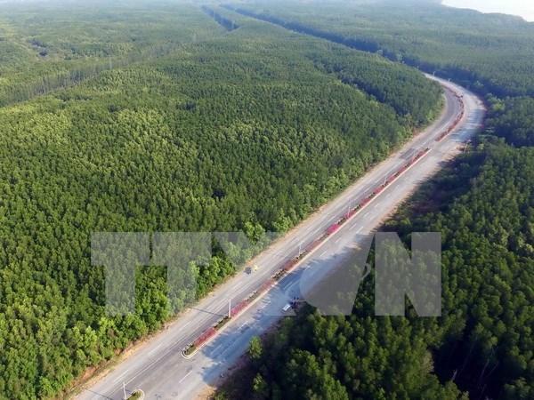 Vietnam aumentara cobertura forestal a 41 por ciento en 2017 hinh anh 1