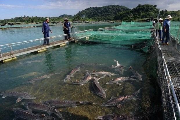 Exitos y desafios de Vietnam en aprovechar recursos marinos hinh anh 1