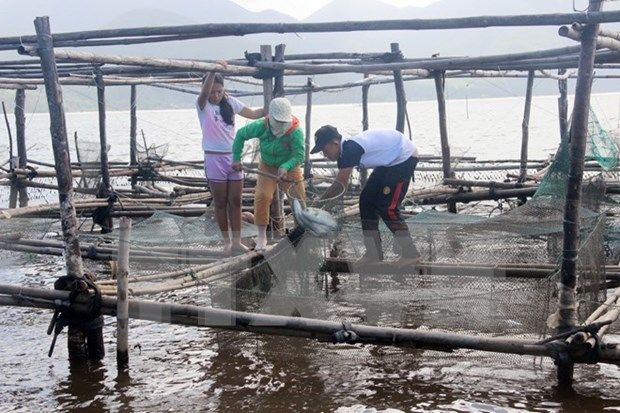 Thua Thien-Hue apuesta por desarrollo de economia maritima hinh anh 1