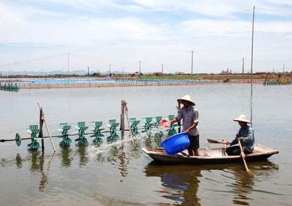 Kim Son avanza en desarrollo de economia basada en el mar hinh anh 1