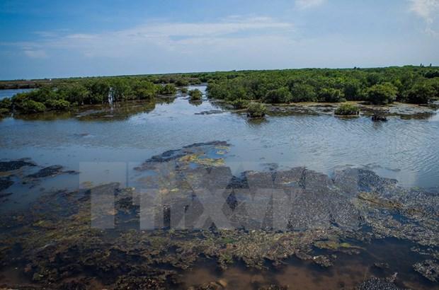 Ramsar, hogar de especies marinas raras hinh anh 1
