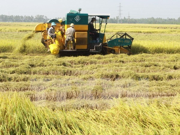 Vietnam gana 2,2 mil millones de dolares por exportaciones arroceras en 2016 hinh anh 1