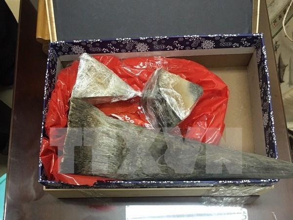 Decomisan presuntos cuernos de rinoceronte en Vietnam hinh anh 1