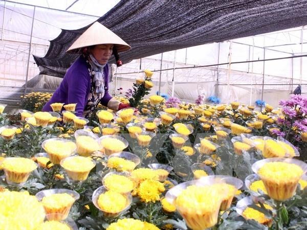 Da Lat establecera centro comercial de flores hinh anh 1
