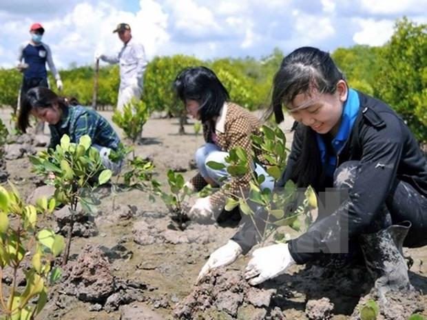 Inician proyecto de gestion de forestacion sostenible en Vietnam hinh anh 1