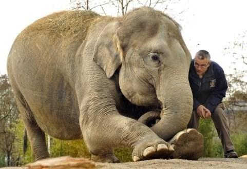 Debaten medidas para la preservacion de elefantes en Vietnam hinh anh 1