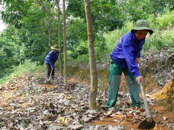 Vietnam ingresa 1,67 millones de dolares por exportaciones caucheras hinh anh 1