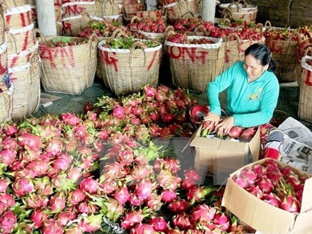 Australia autoriza la importacion de pitahaya vietnamita hinh anh 1
