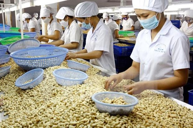 Sector de anacardo de Vietnam preve crecimiento en 2017 hinh anh 1