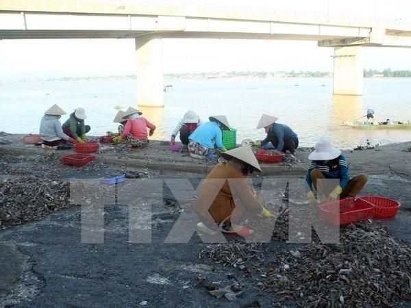 Vietnamitas afectados por incidente ambiental de Formosa recibiran mas compensaciones hinh anh 1