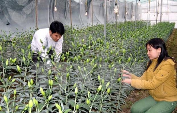Japon apoya a la provincia vietnamita de Lam Dong en desarrollo agricola hinh anh 1