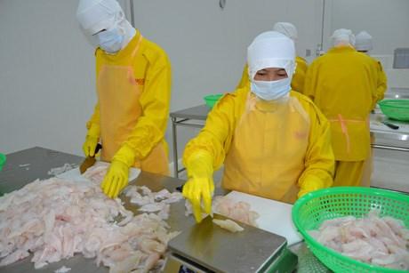 En funcionamiento fabrica de procesamiento de alimentos en Ben Tre hinh anh 1