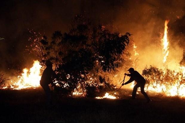 Indonesia aplicara medidas estrictas contra culpables de incendios forestales hinh anh 1