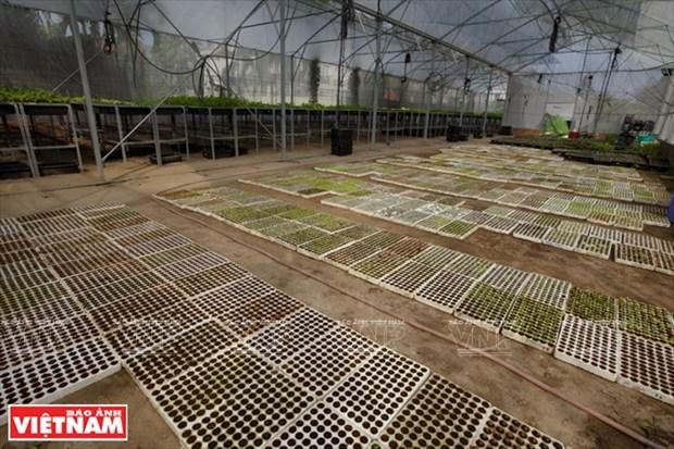 Granja de vegetales organicos Canh Cam hinh anh 1