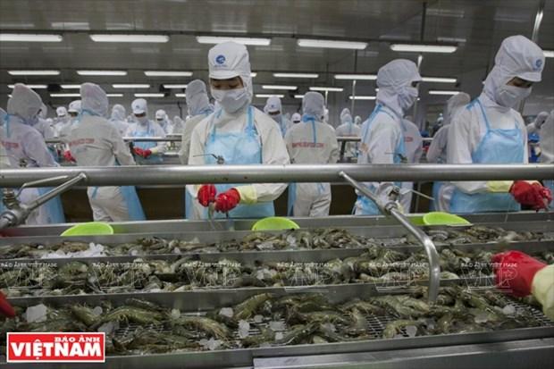 Minh Phu – gran marca de productos acuaticos de Vietnam hinh anh 1