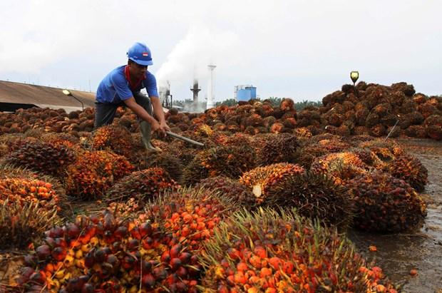 En alza exportacion de aceite de palma de Indonesia hinh anh 1