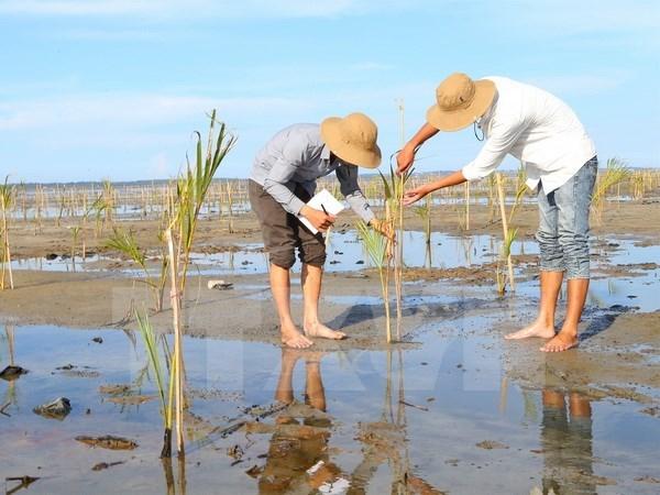Despliegan en Vietnam proyecto de preservacion de humedales hinh anh 1
