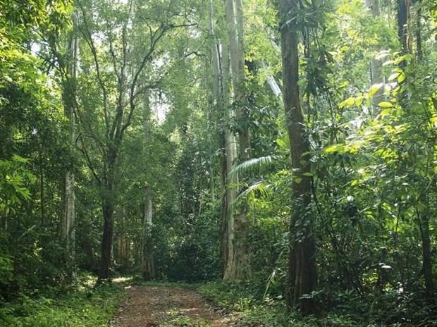 Provincia vietnamita redobla atencion a preservacion de biodiversidad hinh anh 1
