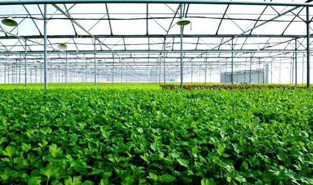 Desarrollan modelo israeli de invernadero en provincia vietnamita hinh anh 1